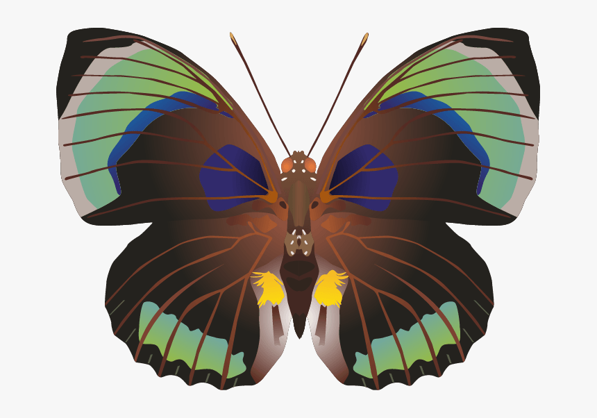 Butterfly Png Images Png - Portable Network Graphics, Transparent Png, Free Download