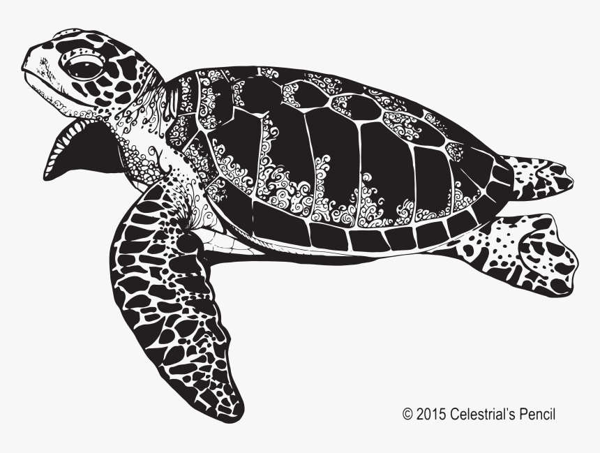 Transparent Sea Turtle Clip Art - Sea Turtle Png Black And White, Png Download, Free Download