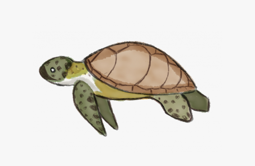 "Sea Turtle Clipart Kemp""s Ridley - Sea Turtle Cartoon Clipart Transparent, HD Png Download, Free Download"