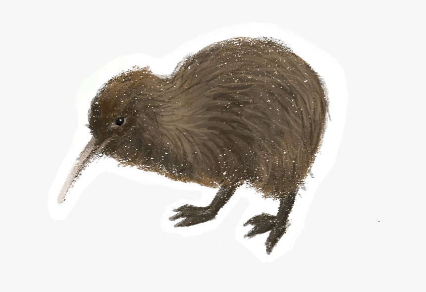 Transparent Kiwi Bird Png - Printable Picture Of Kiwi Bird, Png Download, Free Download