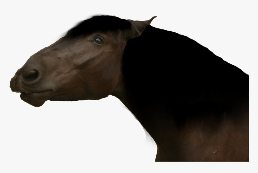 Funny Horse Png - Mustang Horse, Transparent Png, Free Download