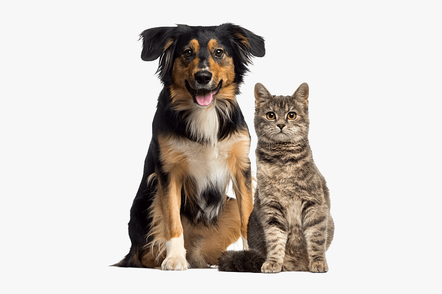 Dog And Cat - Cat And Dog Sitting, HD Png Download, Free Download