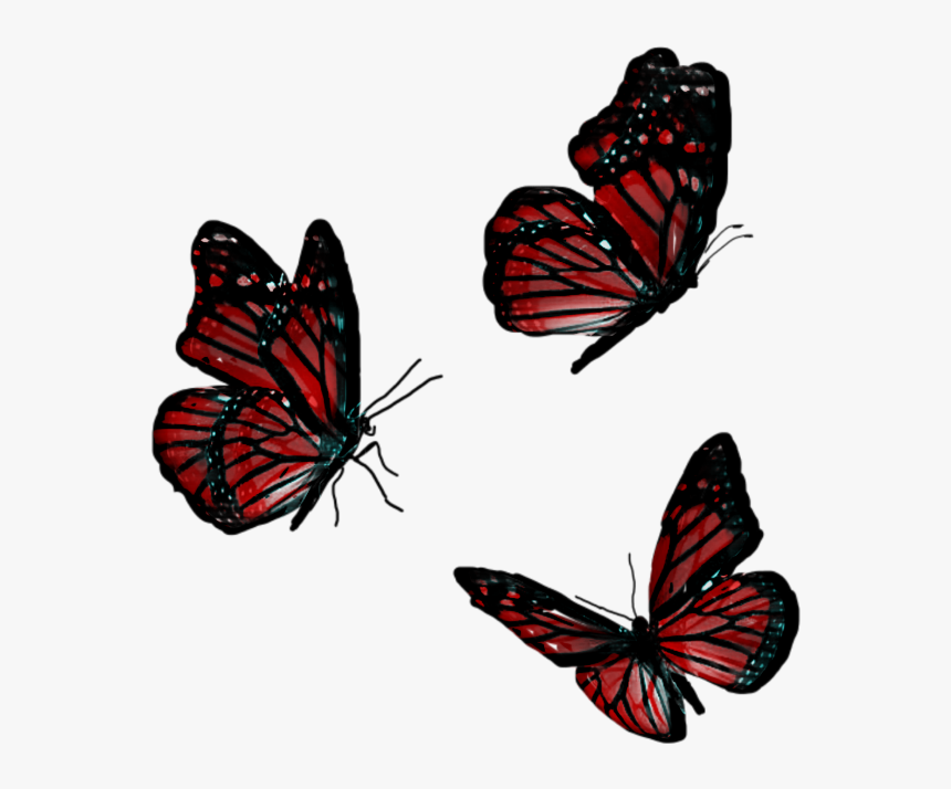 #butterfly #animals #flying #red - Flying Red Butterfly Png, Transparent Png, Free Download