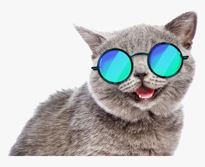 Summer Cat Meme , Png Download - Summer Cat Png, Transparent Png, Free Download