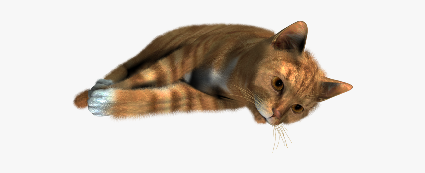 Cute Cat Sleeping Png - Transparent Background Cat Png Transparent, Png Download, Free Download