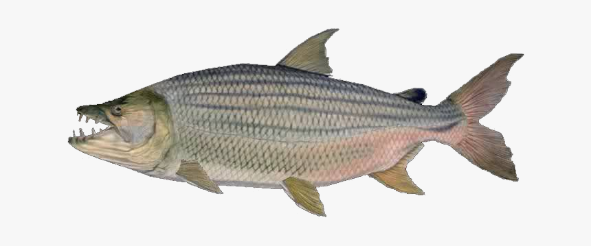 Goliath Tigerfish - Good Things For Christmas 14 Girl, HD Png Download, Free Download