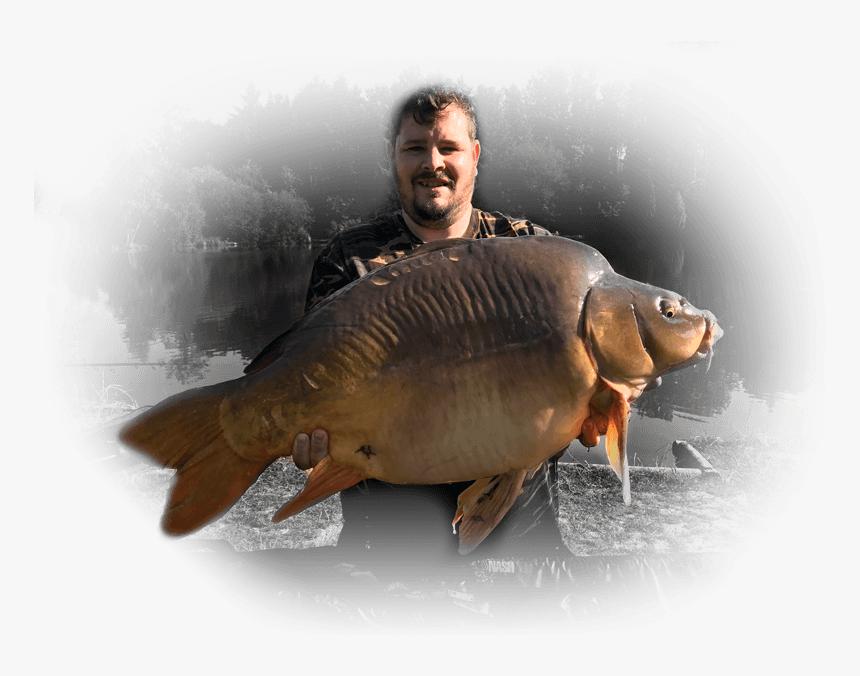 Malhere Carp Garden Carp - Giant Carp, HD Png Download, Free Download