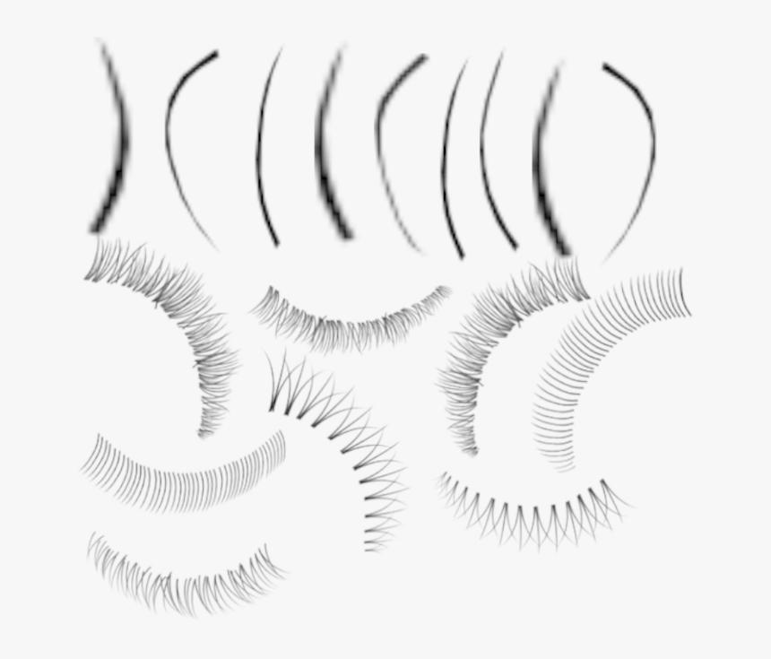Adobe Photoshop Eyelash Brushes Eyelash Brush Photoshop Hd Png Download Kindpng