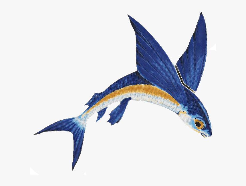 #flyingfish #freetoedit - Flying Fish Png, Transparent Png, Free Download