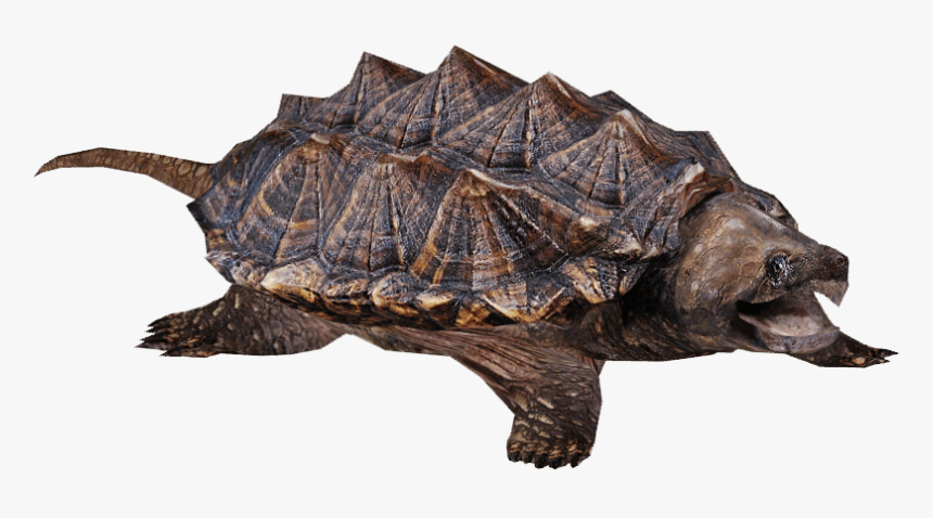 Snapping Turtle - Snapping Turtle Transparent Background, HD Png Download, Free Download