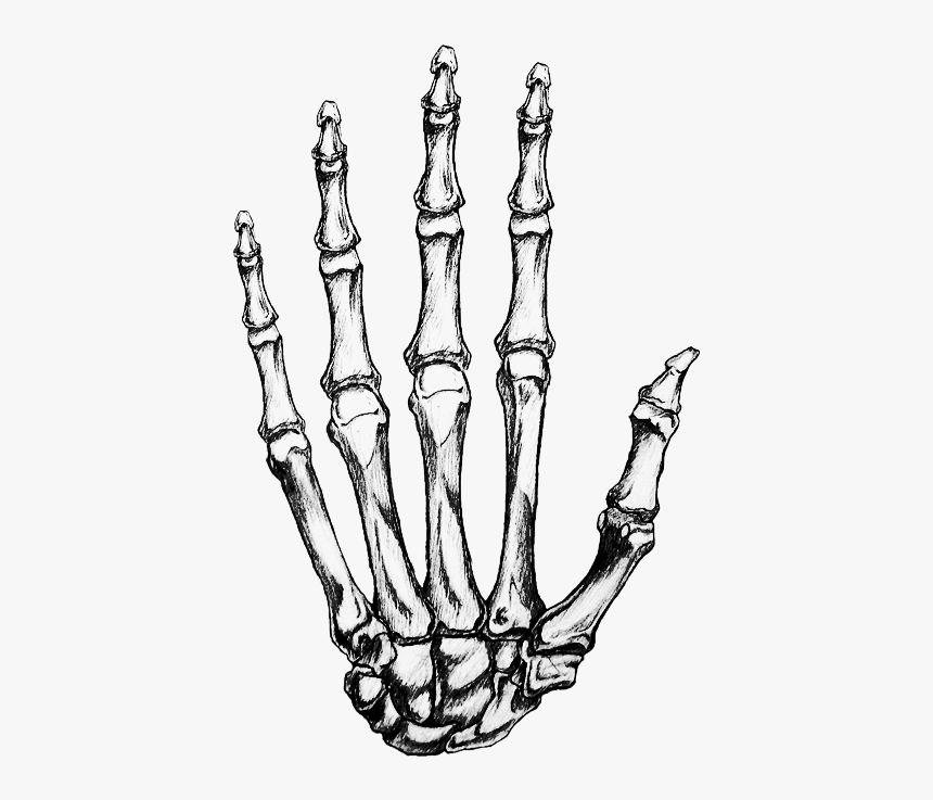 Bone Hand Png Transparent Skeleton Hand Png Png Download Kindpng Pngtree provides you with 209,271 free transparent hand png, vector, clipart images and psd files. bone hand png transparent skeleton