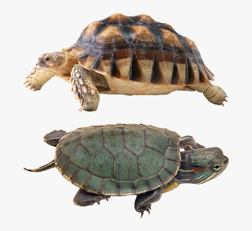 Happy New Turtle 2018 Year Tortoise, HD Png Download, Free Download
