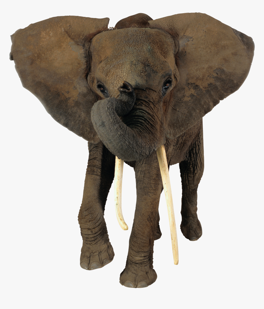 Transparent Background African Elephant Png Png Download Kindpng All elephant png images are displayed below available in 100% png transparent white background for free download. transparent background african elephant