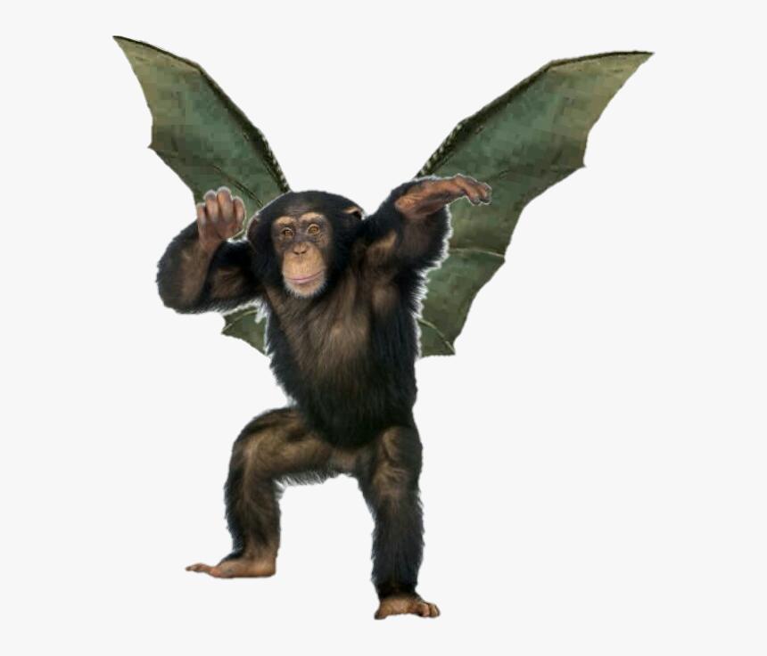 #freetoedit #flyingmonkey #monkeyflying #monkeystickerremix - Transparent Background Monkey Png, Png Download, Free Download