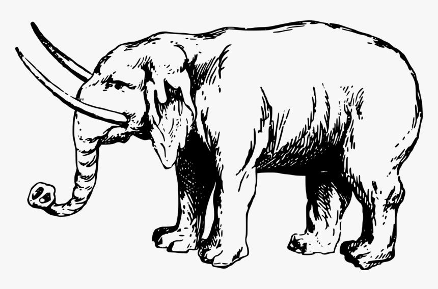 Clip Art Details Gajah Kartun Hitam Putih Hd Png Download Kindpng