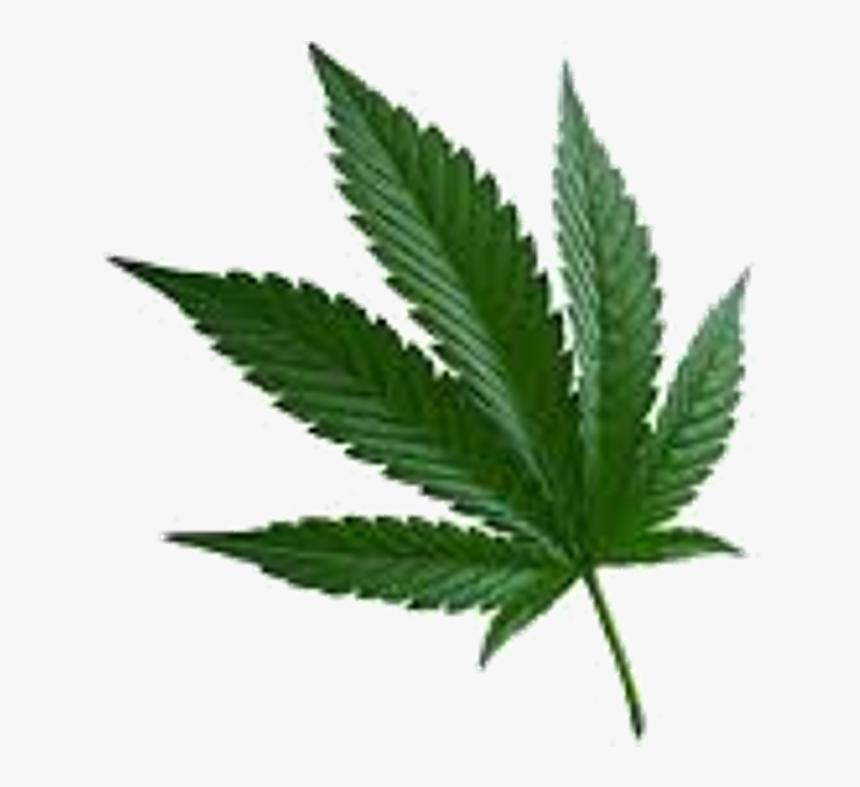 Transparent Real Weed Leaf Png Cannabis Sativa Png Download Kindpng