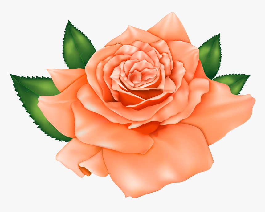 Beautiful Orange Rose Png Clipart - Rose Clipart Flowers, Transparent Png, Free Download