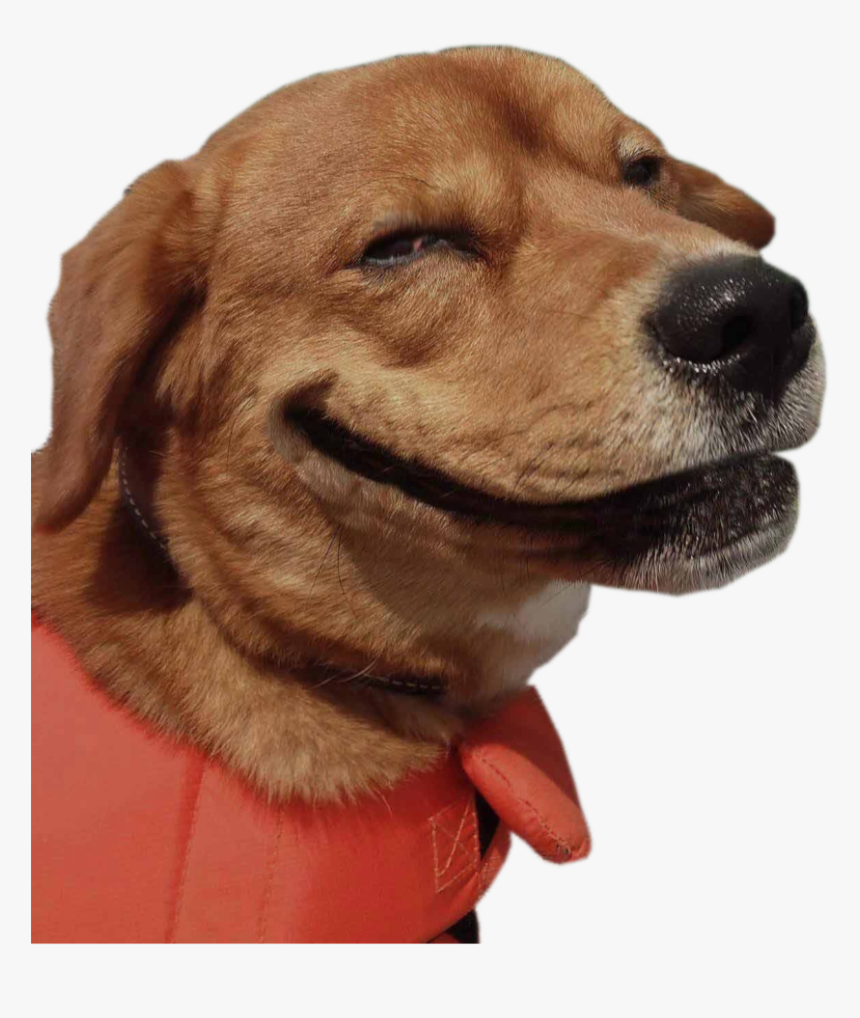 Funny Animal Png Funny Dog Png Transparent Png Kindpng