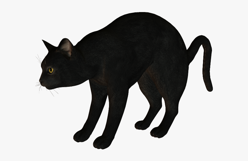 Black Cat Korat Havana Brown Manx Cat - Cat, HD Png Download, Free Download