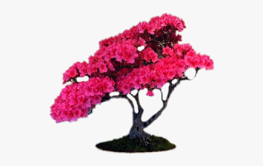 Pink Bonsai Flower Tree Sakura Bonsai Hd Png Download Kindpng
