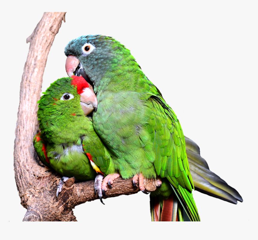 Kiss Hug Love Birds Hd Png Download Kindpng