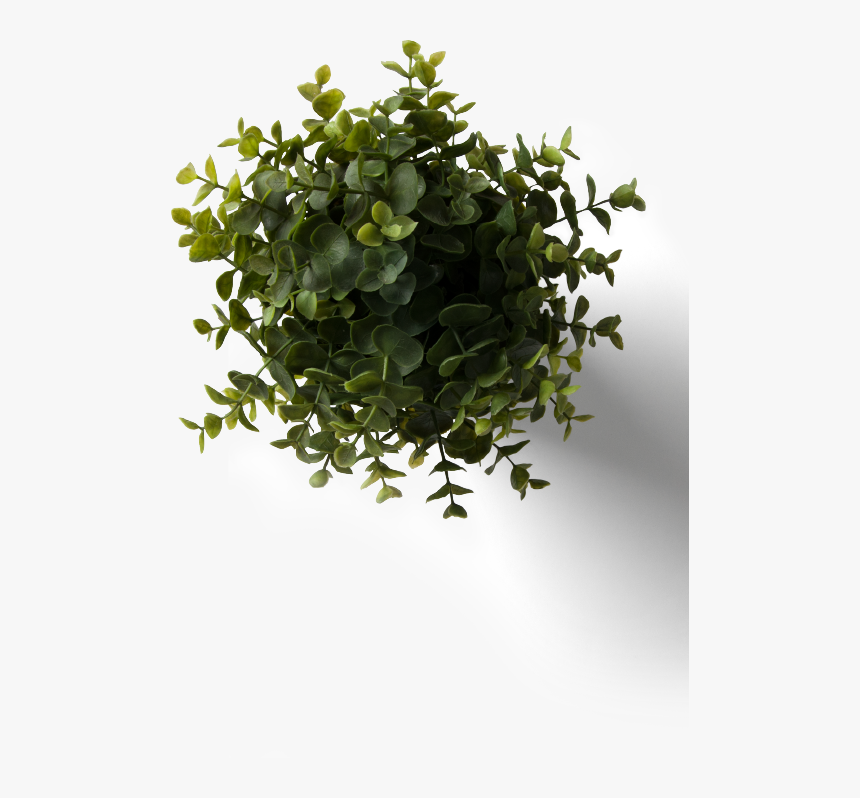 Flower Plant Top View Png With Flower Plant Top View - Rebranding Romania, Transparent Png, Free Download