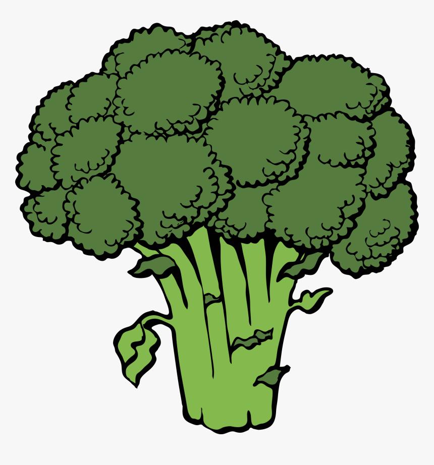 5 Foods Superheroes Eat - Broccoli Clip Art, HD Png Download, Free Download