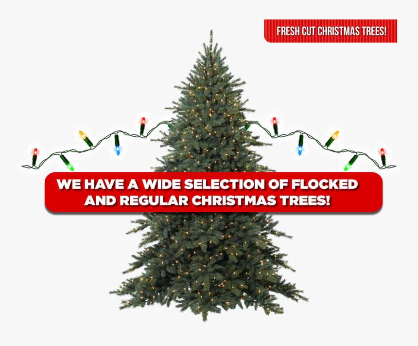Christmas Trees - Balsam Christmas Tree Png, Transparent Png, Free Download