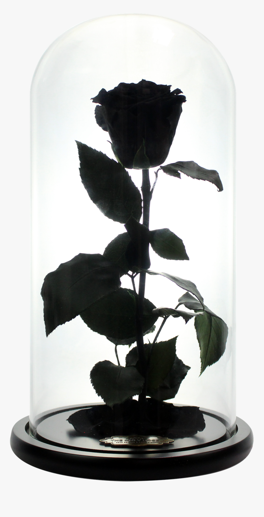 Black Beauty And The Beast Rose, HD Png Download, Free Download