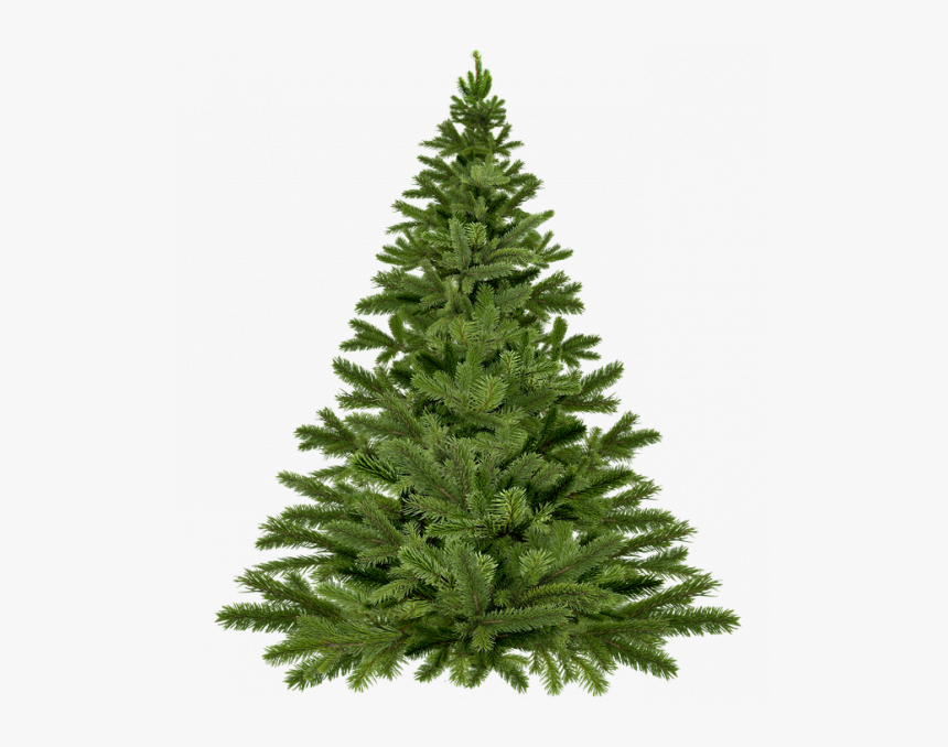 Christmas Tree Not Dressed Pixabay - Blank Christmas Tree Png, Transparent Png, Free Download