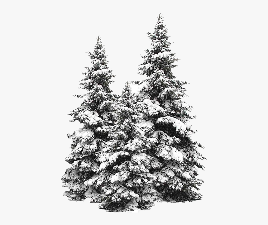 Snow Fir Tree Png Image - Pine Tree Snow Png, Transparent Png, Free Download