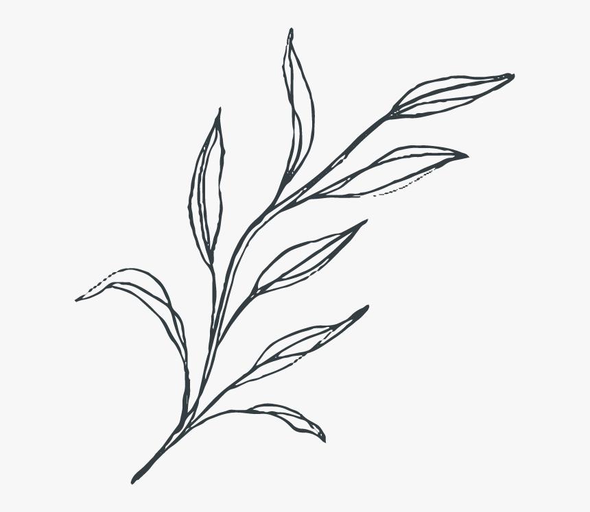 Botanical Vector Illustrations - Sketch, HD Png Download, Free Download