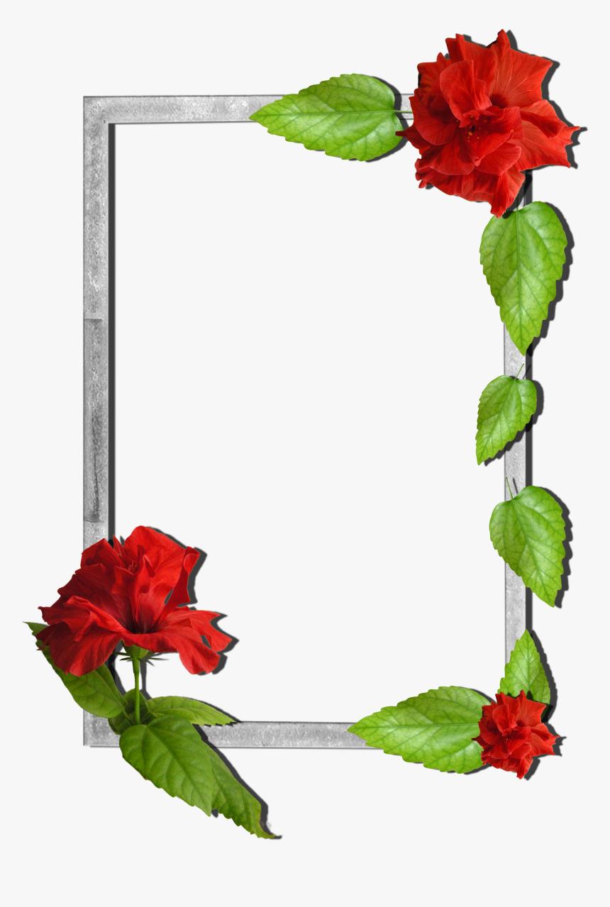 Frame Flower Png Hd, Transparent Png, Free Download