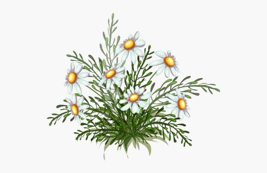 Chamomile, HD Png Download, Free Download