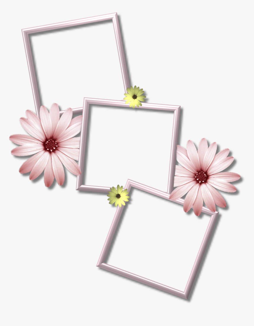Collage Photo Frame Png, Transparent Png, Free Download