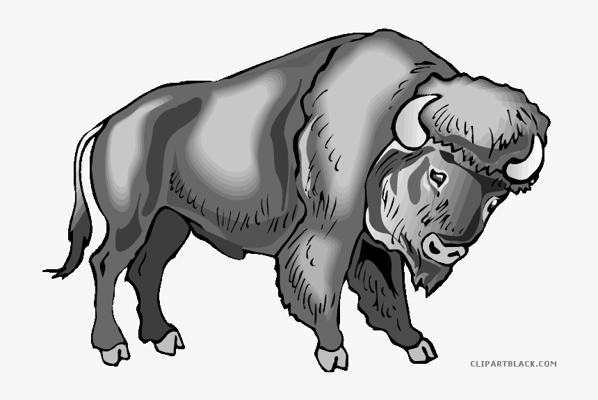 Water Buffalo Clip Art Portable Network Graphics Image - Clipart Buffalo Transparent Background, HD Png Download, Free Download