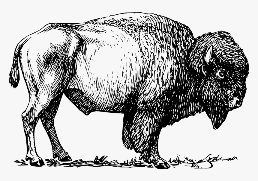 Free Vector Bison, HD Png Download, Free Download