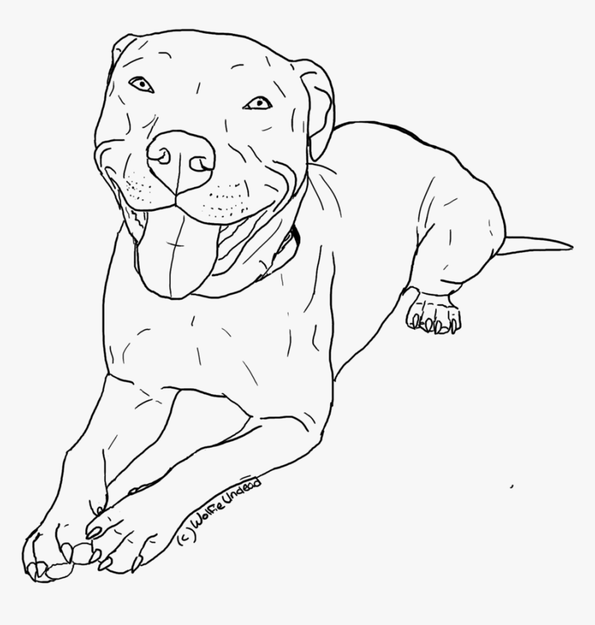 Transparent Pitbull Clipart - Pitbull Coloring Pages, HD Png Download, Free Download