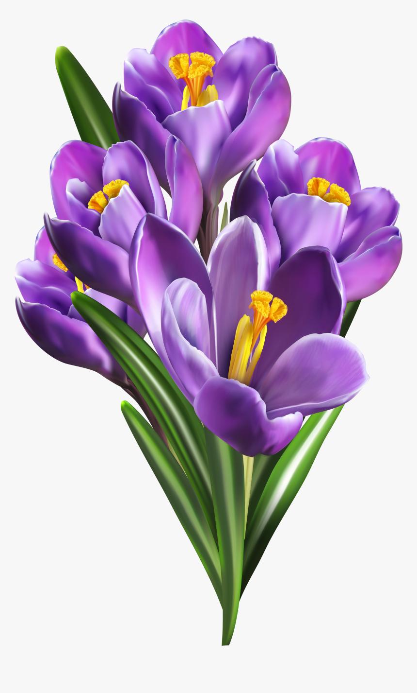 Clipart Spring Crocus - Saffron Flower Png, Transparent Png, Free Download