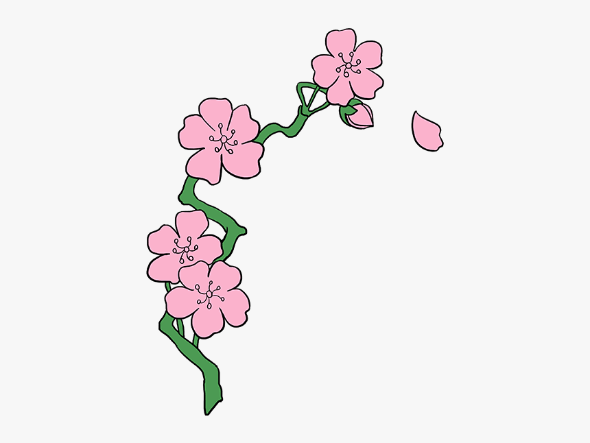 How To Draw Cherry Blossoms Cherry Blossom Drawing Easy Hd Png Download Kindpng