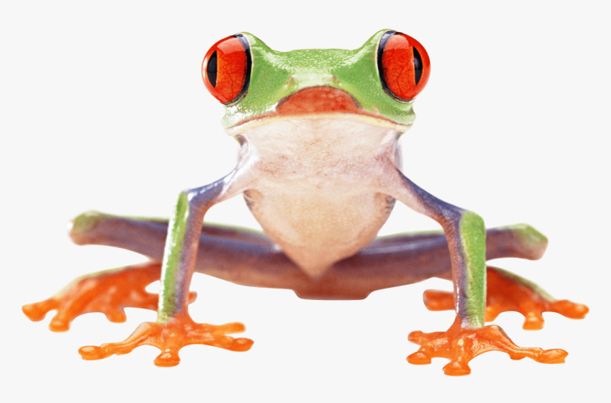 Crazy Green Frog Png Image - Red Eyed Tree Frog Front, Transparent Png, Free Download