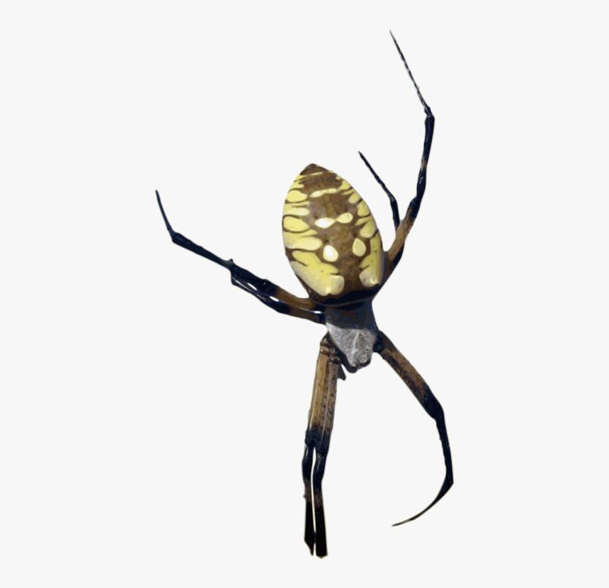 Orb Weaver Spider Png, Transparent Png, Free Download
