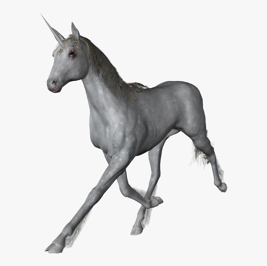 Unicorn Png - Stallion, Transparent Png, Free Download