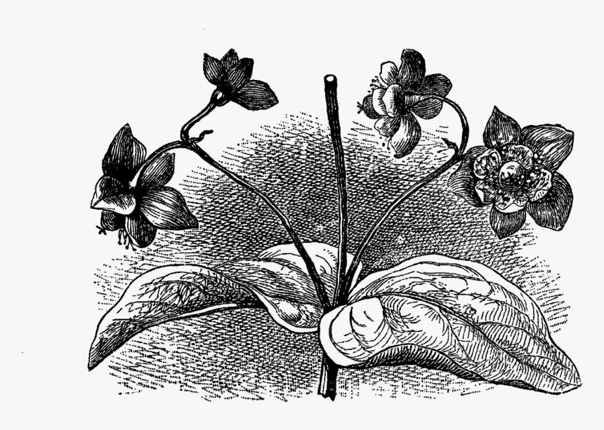 Digital Flower Illustration - Interior Design, HD Png Download, Free Download