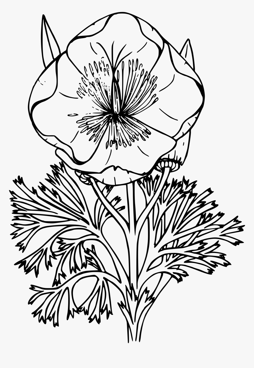 Banner Transparent Download California State Flower - Poppy Line Art Png, Png Download, Free Download