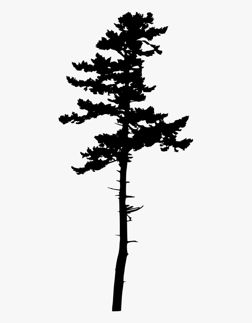 Jack Pine Tree Silhouette Hd Png Download Kindpng