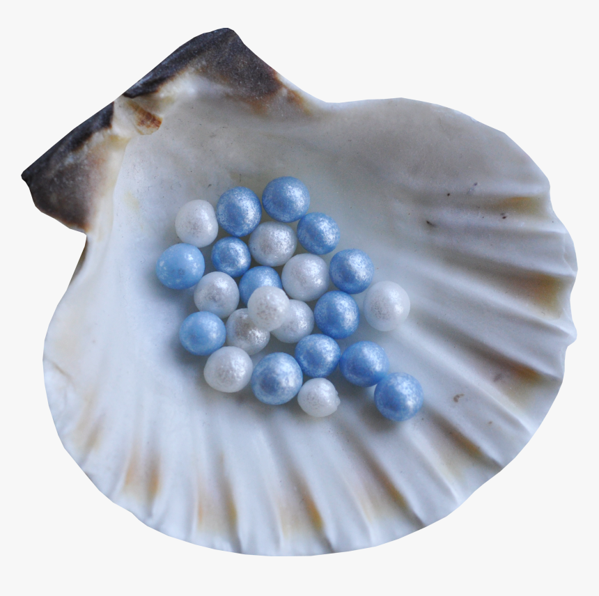 Blue Seashell Png, Transparent Png, Free Download