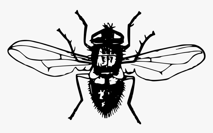 Cartoon Fly Png, Transparent Png, Free Download