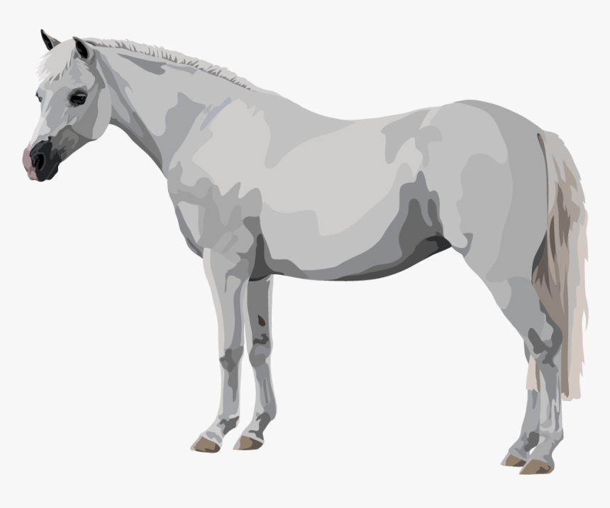 Mustang Horse , Png Download - Stallion, Transparent Png, Free Download
