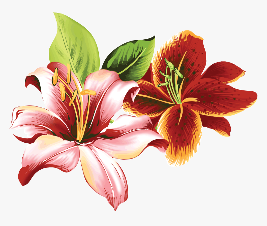 Lilium Png Tiger Lily Flower Lily Art Transparent Png Kindpng